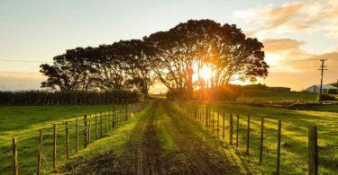 Granja. Agricultura regenerativa, el siguiente paso en sustentabilidad: Patagonia