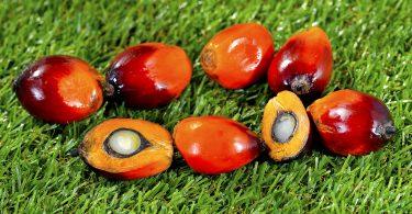 MARS afirma que su aceite de palma está libre de deforestación