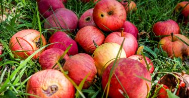 Nestlé, Walmart y General Mills buscan terminar con el desperdicio de alimentos en todo el mundo