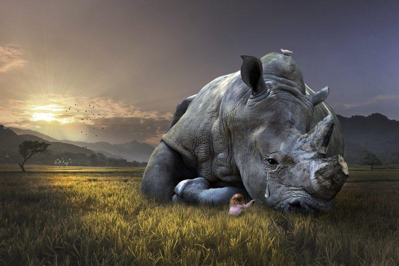 Aproximadamente 30% de las especies de animales y plantas del mundo, en peligro de extinción