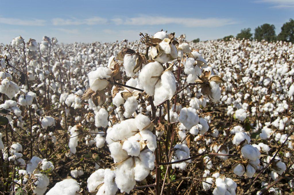 GAP se pone como objetivo usar algodón 100% sustentable para 2025