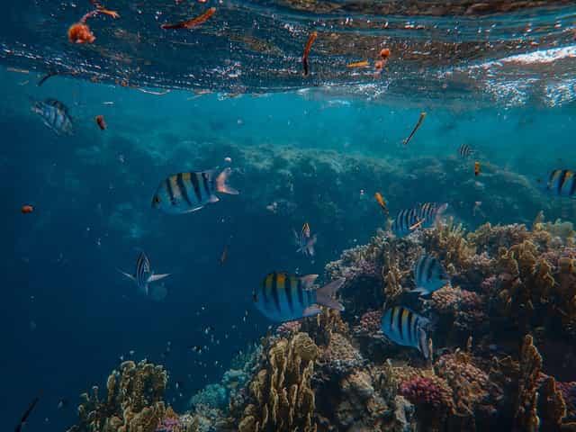Coral. ¡Wow! HSBC invierte en el primer sistema de crédito en el mundo a favor de los arrecifes