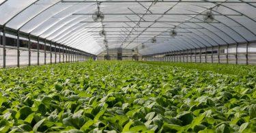 Invernadero. España y sus invernaderos solares proveen 6 de cada 10 verduras que se consumen en Europa