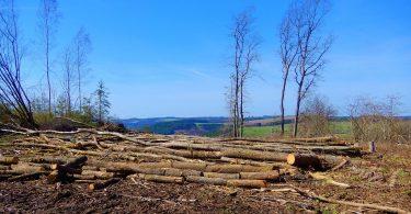 Bancos sin compromiso ante deforestación: 2 de cada 3 bancos en el mundo fallan