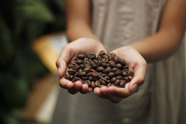 trazabilidad de cafe