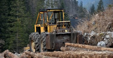Apenas 1% de las empresas lucha vs la deforestación