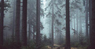 ¿Puede haber beneficios de la tala de árboles?