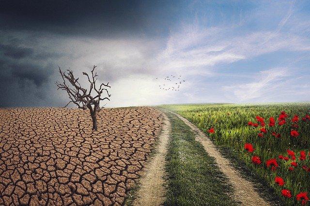 lograr la agricultura regenerativa