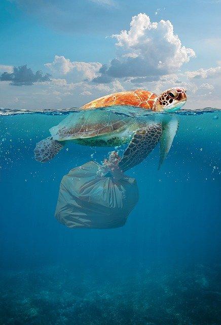 Tortuga. Grupos vulnerables, los más afectados por la contaminación: ONU
