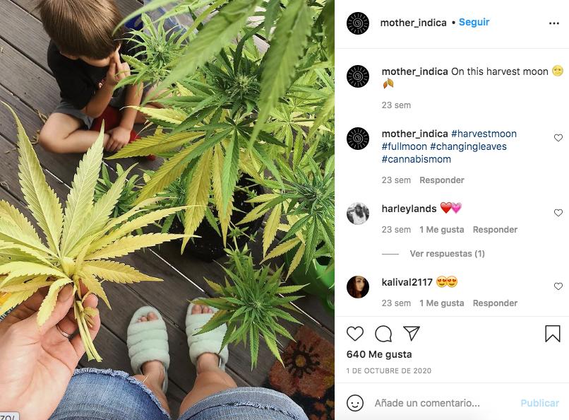 maternidad y mariguana