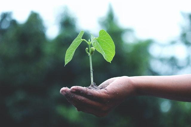 Planta. Contratar proveedores sustentables, la nueva tendencia: Caso FedEx