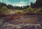 Amazon, Unilever y Nestlé… en la alianza contra la deforestación por un billón de dólares