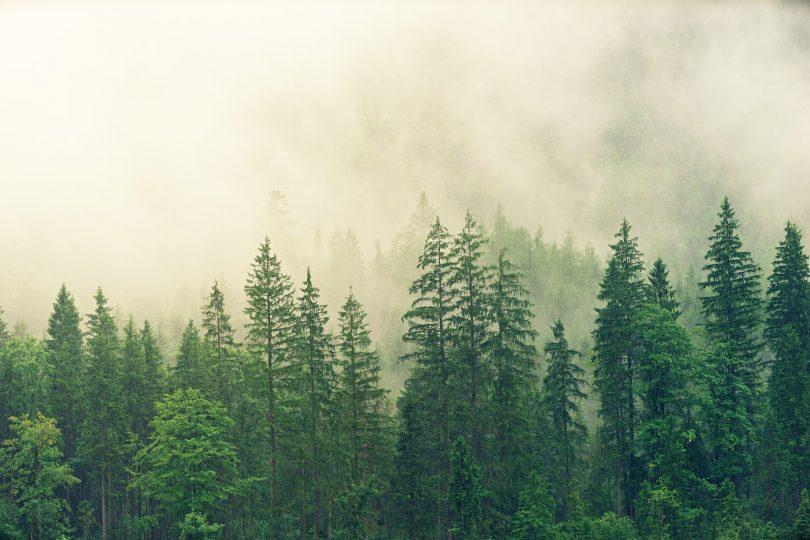Apple lanza fondo para restauración de bosques, invirtiendo 200 mdd