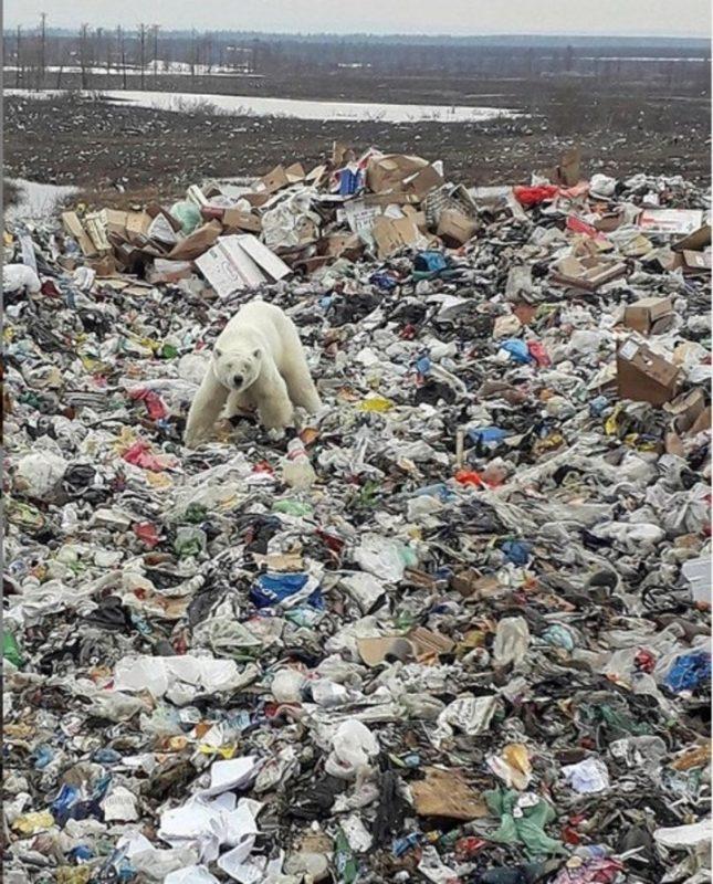 Salvar a todas las especies, solo así podrían