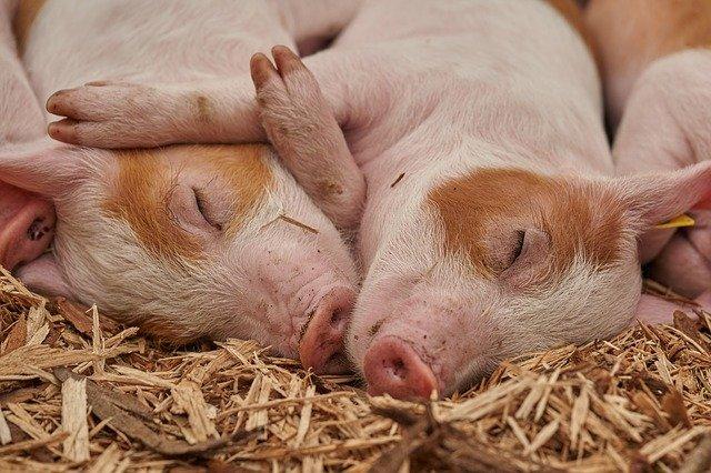 compañías de alimentos conscientes del bienestar animal