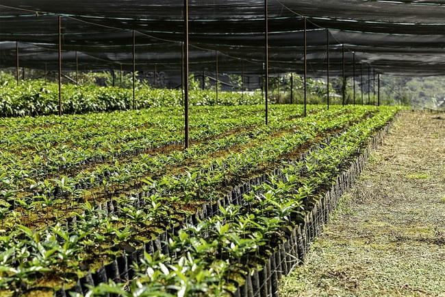 la sostenibilidad del café
