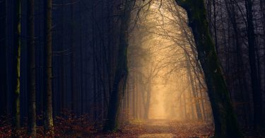 gases de árboles muertos