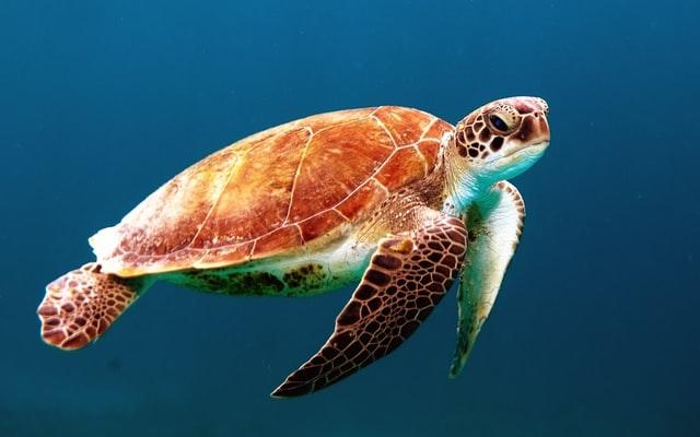 TortuGA. Informes digitales de sustentabilidad: ¿Por qué Evian comunica cada vez más online?