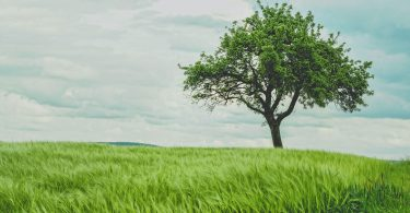 ¿Podemos hacer árboles genéticamente modificados para luchar contra el cambio climático?