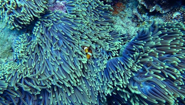 Aquaman a la gran barrera de coral