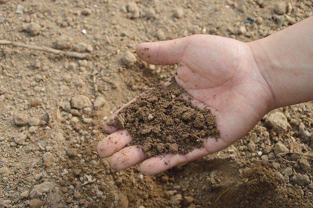 cuidar los suelos fertilizantes
