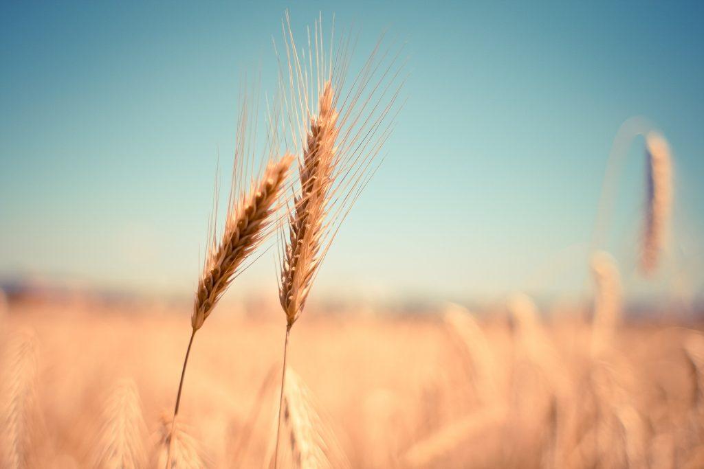 Consumidores quieren marcas de alimentos regenerativas