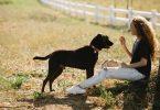 acciones para prevenir el maltrato animal