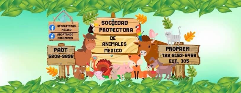 acciones para prevenir el maltrato animal y promover la adopción