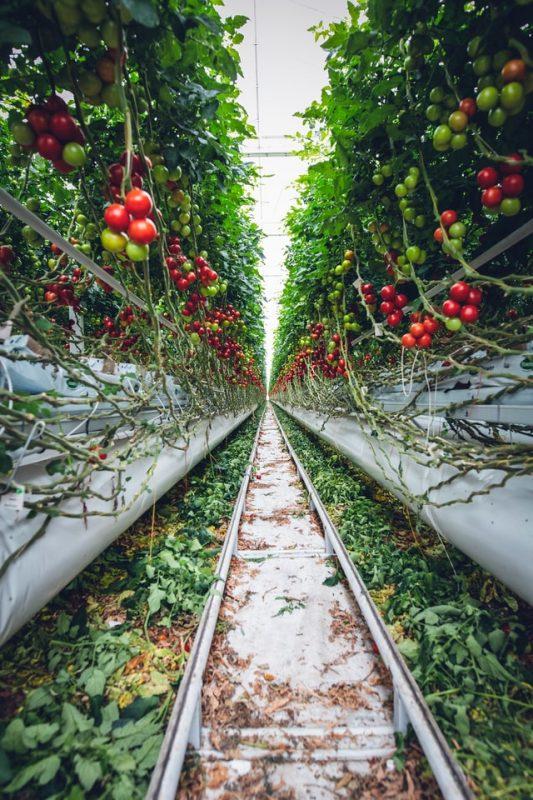 retos de la economía circular para las empresas