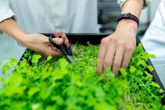 impulsar agronegocios sustentables