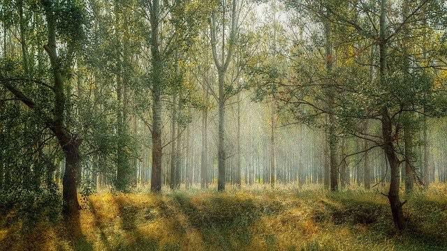 soluciones para los problemas ambientales cuidar a los bosques