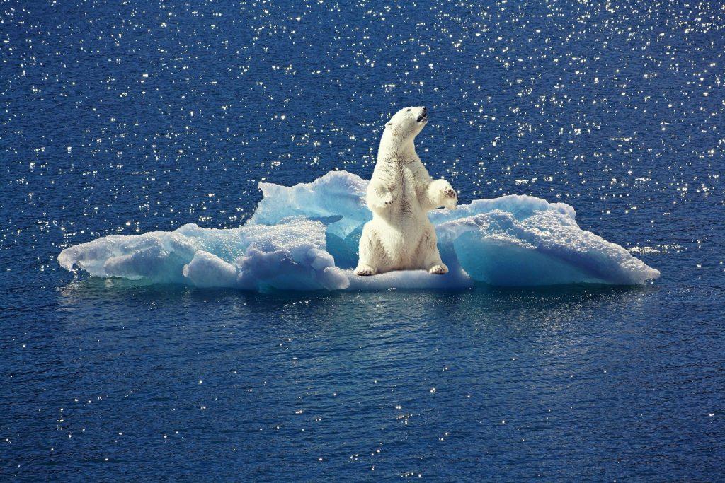 causa del cambio climático en todas las regiones del mundo