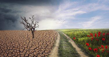 Sustentabilidad obligatoria para las personas: ¿Única solución para crisis climática?