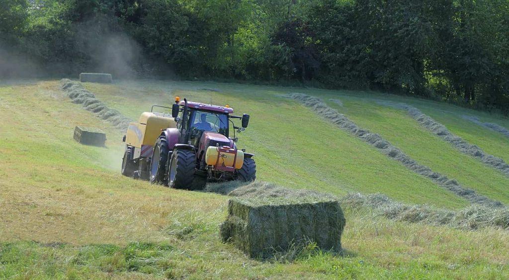 empleo informal trabajadores agrícolas