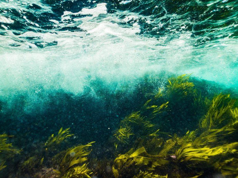 Plantar bosques en el océano es posible