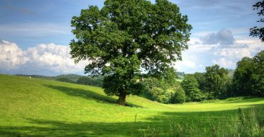 Árboles en Twitter para salvar a los bosques