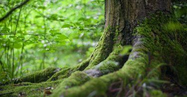 plantar 20 millones de árboles para 2030